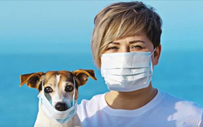 Can pets infect people with COVID-19?